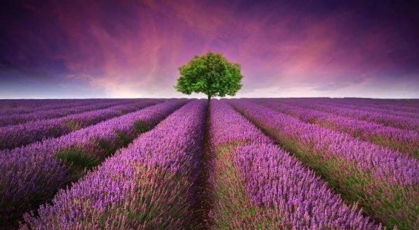 Agnieszka Kowalska - Bliss In Me - Essential Oils & Organic LifeStyle (5)