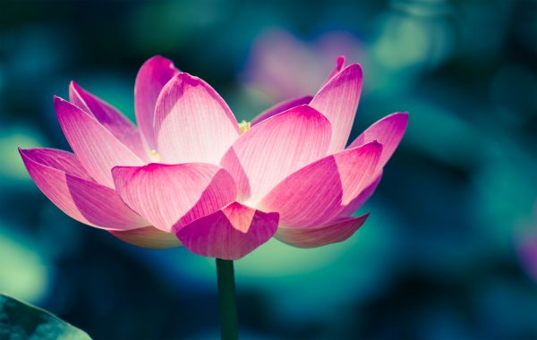 Agnieszka Kowalska - Bliss In Me - Hormone Yoga Therapy (6)